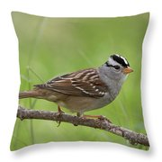 adult White-crowned Sparrow Throw Pillow