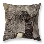African Elephant Throw Pillow by Alan M Hunt