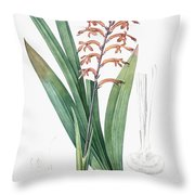 African Flag Illustration From Les Liliacees  1805 By Pierre Joseph Redoute   1759 1840  Throw Pillow