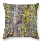 Along The Trail 3 Throw Pillow