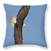 American Bald Eagle In Flight IIi Throw Pillow