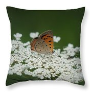 American Copper On Queen Anne's Lace Throw Pillow