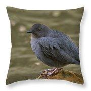 American Dipper, Sierra County California Throw Pillow