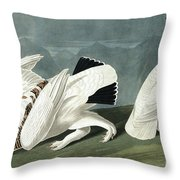 American Ptarmigan, Tetrao Mutus, White Tailed Grous, Tetrao Leucurus Throw Pillow