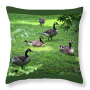 An Afternoon With Canada Geese Throw Pillow