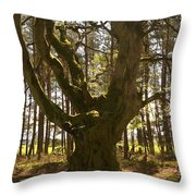 ancient tree in forest near Greenlawin Scottish Borders Throw Pillow
