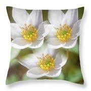 Anemone Nemorosa 2 Throw Pillow