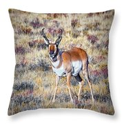 Antelope Buck 2 Throw Pillow