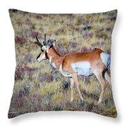 Antelope Buck Throw Pillow