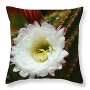 Argentine Giant White Flower And Red Bud Throw Pillow