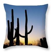 Arizona Cacti, 2008 Throw Pillow