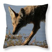 Arizona Coyote  Throw Pillow