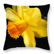 Sunny Yellows Of A Spring Daffodil  Throw Pillow