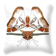 Atlas Moth2 Throw Pillow