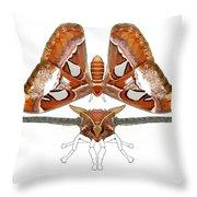 Atlas Moth4 Throw Pillow