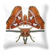 Atlas Moth5 Throw Pillow