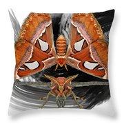 Atlas Moth8 Throw Pillow