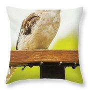 Australian Kookaburra Throw Pillow