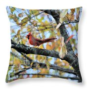 Autumn Cardinal Throw Pillow
