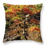 Autumn Color In Smoky Mountains National Park Throw Pillow