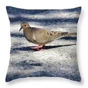 Baby Mourning Dove Throw Pillow