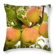 Backyard Garden Series - Apples In Apple Tree Throw Pillow