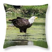 Bald Eagle's Look Throw Pillow