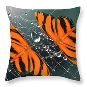 Banded Orange Butterfly. Throw Pillow