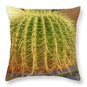 Barrel Cactus Royal Palms Phoenix Throw Pillow