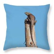 Basking Lizard Throw Pillow
