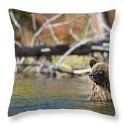 Bathing Blonde Grizzly Throw Pillow