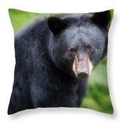 Bear Stare Throw Pillow