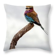 Beauty With Wings, The Lilac Breasted Roller Throw Pillow