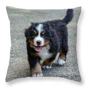 Bernese Mountain Dog Puppy 2 Throw Pillow