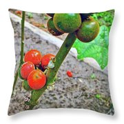 Berries In Shaman's Garden In Amazon Jungle, Peru Throw Pillow