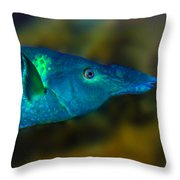 Bird Wrasse Throw Pillow
