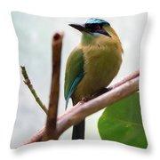 Blue-crowned Motmot Throw Pillow