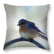 Bluebird Fluff Throw Pillow