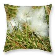 Bog Cotton On The Moor Throw Pillow