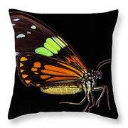 Boisduval's Tiger Moth Throw Pillow