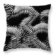 Brain Coral In Macro Bw Throw Pillow