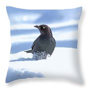 Brewer's Blackbird Throw Pillow