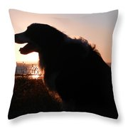 Brodie In The Sun Throw Pillow