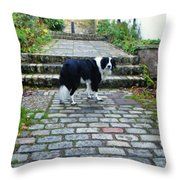 Brodie - Just Checkin' Throw Pillow