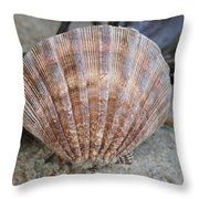 Brown Cockle Shell And Driftwood 2 Throw Pillow