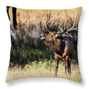 Bull Elk 3068 Throw Pillow
