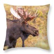 Bull Moose In Fall Colors Throw Pillow