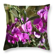 Bunch Of Pink Sweet Peas In The Sun Throw Pillow