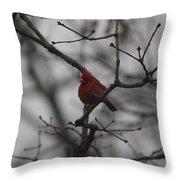 Cardinal On The Limb Throw Pillow