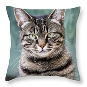 Cat Posing For The Camera. Throw Pillow